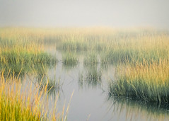 Misty morning (lablue100) Tags: mist fog water sea bay colors grass nature landscapes reads calm natural beauty action sky reflections