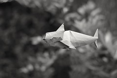 Vaquita marina (Jose_Herrera_B) Tags: origamiartist origami origamimodel origamidesign joseherrera joseherreraorigami origamivaquitamarina vaquitamarina especiesenpeligro endangeredspecies paperartist papiroflexia mexicanart artemexicano