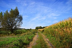 summer moods (JoannaRB2009) Tags: summer mood sunny path road green golden field meadow tree plants nature landscape view countryside lowersilesia dolnyśląsk polska poland