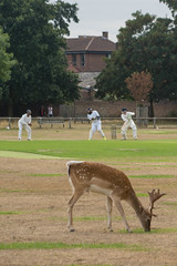 Photo of Cricket and deer