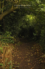 England_Summer_2018_III (LyonelPerabo) Tags: outdoor nature england britain great europe european green forest tree trees hampton arden hamptoninarden warwickshire path