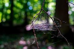 Industar ISO800 1/60 f2.8 (freudensammler.photography) Tags: vintagelens nature bokeh bokehlicious forest spiderweb