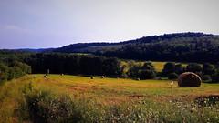 Aranysárga réti csend (Zalaújlak közelében) (milankalman) Tags: summer countryside nature sunshine