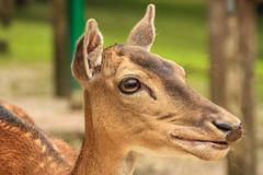 IMG_9417 (karlheinz.nelsen) Tags: essen städte ruhrgebiet gruga messeessen natur tiere
