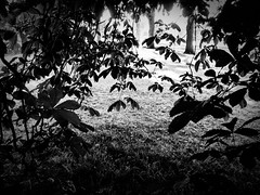 rnor80860.jpg (Robert Norbury) Tags: fuckit somearelandscapessomearenot icantbearsedkeywording fineartphotography blackandwhite photographer itdoesntmatterwhattheyarepicturesoftheyarejustpictures itdoesntmatterwhattheyarepicturesoftheyarejustpictur