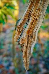DSC09007 (wildtree) Tags: bokeh stf 100mmstf sony sonyfetelephoto100mmf28stfgmoss smoothtransfocus sel100f28gm f28