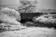 Glencar Waterfall (Infrakrasnyy) Tags: sony alpha nex 5n full spectrum infrared ir bw 093 black white monochrome colorless ireland leitrim river glencar waterfall erie park leaves creek bridge ghostly
