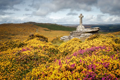 Cave-Penney Cross (Rich Walker Photography) Tags: dartmoor devon landscape landscapes landscapephotography heather gorse memorial cross soldier cloud sky yellow pink landmark landmarks tor england greatbritain canon efs1585mmisusm eos eos80d