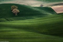 Alberi gemelli (SDB79) Tags: alberi colline molise ururi verde campagna agricoltura rurale paesaggio
