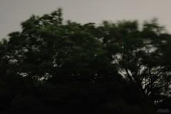 風がふいている (atacamaki) Tags: xt2 18mm xf fujifilm jpeg撮って出し atacamaki 台風 余波 風 出島 home 庭森 tree night wind nature かすみがうら 出島の家 うたうたい交響曲