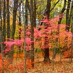 Pink Fall thumbnail
