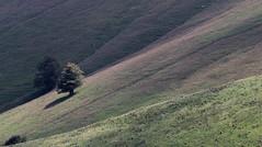 Armonia (lincerosso) Tags: paesaggio landscape mountainscape luce light faggio fagussylvatica estate montepizzoc bellezza armonia