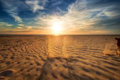 Supersonic Dog (dubdream) Tags: beach huelva andalucía colorimage españa spain puntaumbría sand dog clouds sky outdoor landscape seascape playa olympuspenf dubdream atlantic ocean