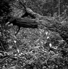 testroll SL66 (salparadise666) Tags: rolleiflex sl66 planar 80mm fomapan 100 boxspeed caffenol rs 13min nils volkmer vintage medium format 6x6 square film analogue camera landscape countryside germany north german plains lowlands niedersachen region hannover