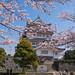 Chiba Castle Sakura - Tokyo, Japan