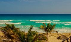 Gurushots-0339 (db-photographie) Tags: cancun mexique oasissens