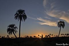 Atardecer en el Palmar (Florián Paucke) Tags: palmar parquenacionalelpalmar butiayatay palmerayatay ecología sol atardecer cielo horizonte azul nubes biotopo biología medioambiente naturaleza naturalista cienciasnaturales