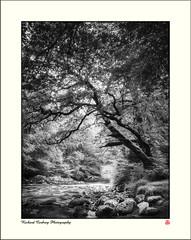 Afon Mawddach at Tyddyn Gwladys (Chalky666) Tags: tree trees wood woodland forest river snowdonia gwynedd wales landscape mono art