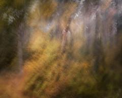 Build a Fire (gerainte1) Tags: icm colour woods trees autumn