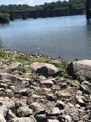 c2018 Sept 19, Gray Heron @McFarland Park (King Kong 911) Tags: heron gray bird shore