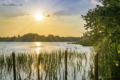 Palen boven water (Geert E) Tags: landschap landscape mol zonsondergang sunset vijver