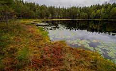East-Helsinki, Finland. (Esa Suomaa) Tags: esasuomaa trees forest swamp pond autumn helsinki finland olympusomd zuikopro scandinavia europe syksy