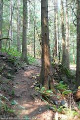2018-08-18 Whistle Lake Trail 205 (25) (680x1024) (-jon) Tags: anacortes skagitcounty skagit fidalgoisland sanjuanislands washingtonstate washington pnw pacificnorthwest salishsea pugetsound acfl anacortescommunityforestlands whistlelake lake trail path 205 nikon nikonl22 tree douglasfir fern alder summer woods forest a266122photographyproduction
