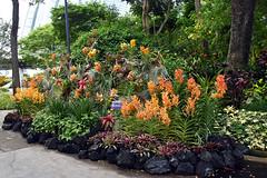 Floral Display (chooyutshing) Tags: flowers floraldisplay singaporegardenfestival2018 gardensbythebay baysouth marinabay singapore