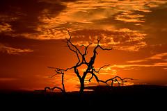 sunset south africa_4466 (ichauvel) Tags: coucherdesoleil sunset ciel sky orange arbre tree silhouette voyage travel exterieur outside afriquedusud southafrica afrique africa mpumalanga soir evening beautédelanature beautyofnature parkkruger krugernationalpark