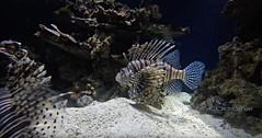 Monterey California (SLDdigital) Tags: montereybay monterey bay aquarium slddigital california californiacities marinelife water