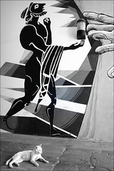ailurophobia (bostankorkulugu) Tags: faneromeni cat feline wall mythology nicosia lefkosia lefkosa cyprus kibris kypros graffiti mural