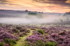 Under the tree (Ellen van den Doel) Tags: zonsopkomst natuur landscape veluwe nature mist boom nederland outdoor hill heuvel clouds sun summer 2017 weather landschap augustus berg heide myst tree netherlands heather posbank sunrise mountain rheden gelderland nl