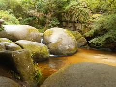 DSCN5593 (norwin_galdiar) Tags: bretagne brittany breizh finistere monts darrée nature landscape paysage