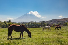 Peaceful scenery with volcano Misti  in the background. (Inti Runa) Tags: