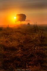 Nebelsinfonie (Peter Daum 69) Tags: nebel fog sonnenaufgang sunrise landscape landschaft scenery farbe color baum tree sonnenuntergang sunset licht light photoart fotografie moods stimmung traum dream canon eos