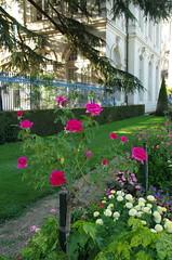 JLF19908 (jlfaurie) Tags: jardin hôteldeville evéché bourges jlfr mechas mpmdf lucila 21082018 flores garden flowers
