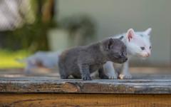 kittens II (06) (Vlado Ferenčić) Tags: kittens kitty catsdogs cats vladoferencic animals vladimirferencic animalplanet zagorje hrvatska hrvatskozagorje croatia klenovnik nikond600 nikkor173528