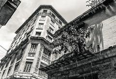 Havanna balcony (KrolopFoto.de) Tags: balcony havanna cuba kuba 2018 blackandwhite blancoynegro schwarzweis noiretblanc tree baum haus house outdoor rusty crusty lostplaces krolopfoto krolop d7200 nikon