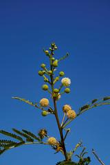 Flower Namibië (Sjak11) Tags: namibië closeupmacro flowers bloemen sony instagram