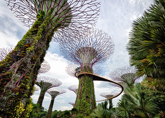 Supertree Connection (claustral) Tags: 2018 singapore supertrees wideangle gardensbythebay walkway modern futuristic daytime metal trees i500