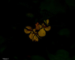 In the Dark (that_damn_duck) Tags: nikon nature plant flower petals blossom blooming stems