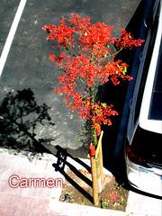 FELIZ JUEVES DE FLORES AMIG@s (CarmenCordero1949) Tags: árbol calle coche carmen