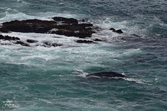 DSC_2469 ~ Zoom Rocky Creek State Scenic Viewpoint OR Gray Whale (stephanie.ovdiyenko) Tags: rockycreekstatescenicviewpoint oregon oregoncoast pacificcoast pacificocean pacificnorthwest ocean rockyshoreline rocks graywhale mammal marinelife whale