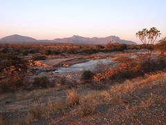 8575ex2 the Ewaso Ngiro River at sunset (jjjj56cp) Tags: river ewasongiroriver valley rivervalley banks riverbanks sandy rocky palmtrees mountains hills grasses vegetation sunset shabareserve kenya africa safari africansafari sundowner p900 jennypansing landscape africanlandscape