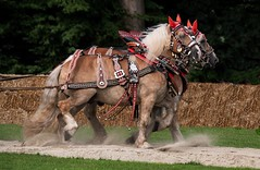 Pferde in Aktion (fuchs_ernst) Tags: panasonic tele pferde füssing