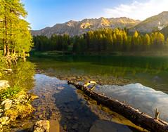 Displaced (b.adolphi) Tags: green goldenhour lake tree stones mountains reflection yellow switzerland graubünden bergün preda laidapalpuogna palpuognasee water landscape