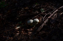 #morning #photooftheday #picoftheday #colors #landscape #nofilter #photo #skyline #ontheroad #mountains #minimalism #sunset #sunset_pics #wood #forest #forestadelmontepenna #valdaveto #Italia #liguria #mushroom (cuocopopo_mc) Tags: mushroom ontheroad skyline italia nofilter valdaveto wood forestadelmontepenna colors minimalism forest landscape morning photo photooftheday sunsetpics picoftheday mountains liguria sunset