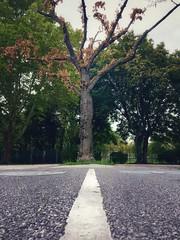 (manfred majer) Tags: tree wienerlinien white einsonce urban street lines vienna blackandwhite