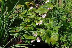 1500-05L (Lozarithm) Tags: newforest nfwp longdown hants flowers flora pentax k1 70300 sigma zoom sigmaaf70300mmf456apodgmacro