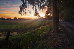 Promising evening (Geert E) Tags: retie sunset zonsondergang dreef orange landschap landscape kasseiweg cobblestone